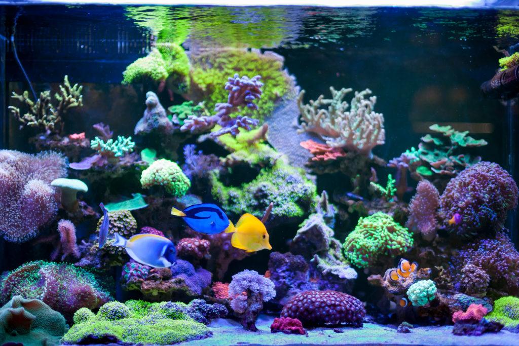 aquarium ambiance