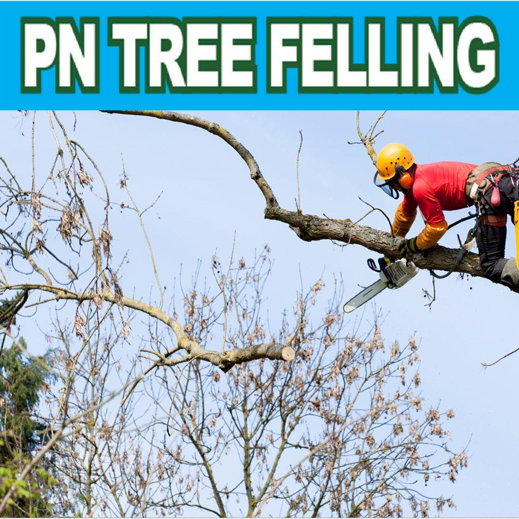 pn tree felling