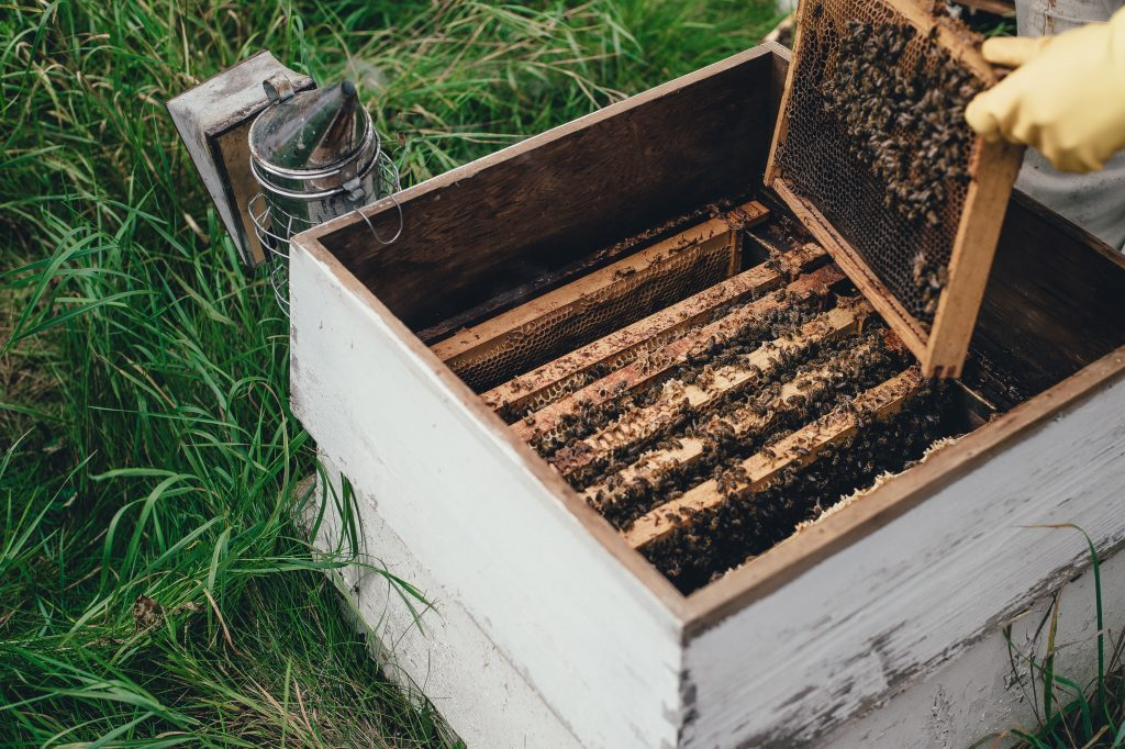 Building a beehive