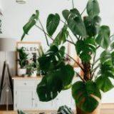 Eden: Your Guide to Indoor Plants