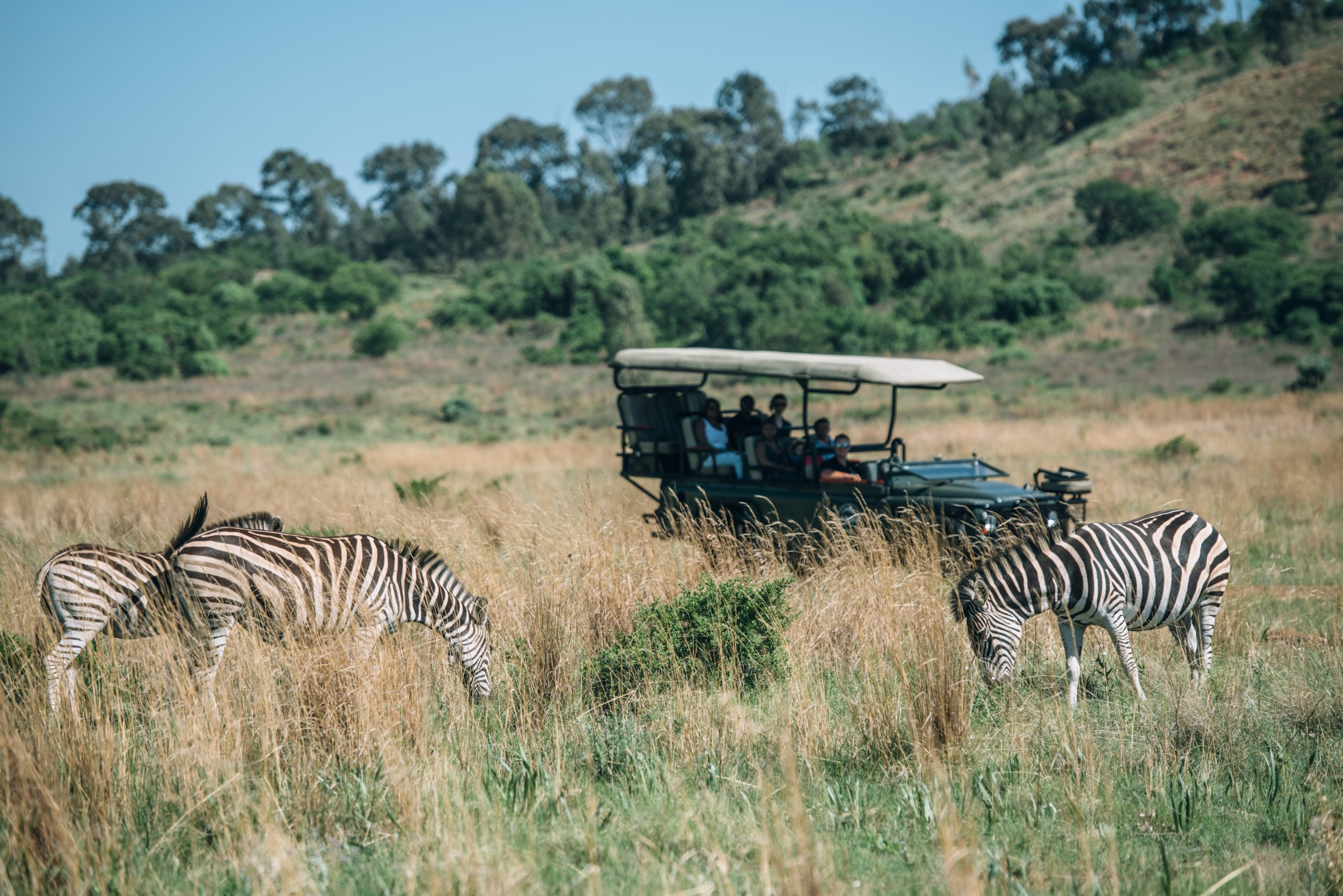 thaba eco park game drives