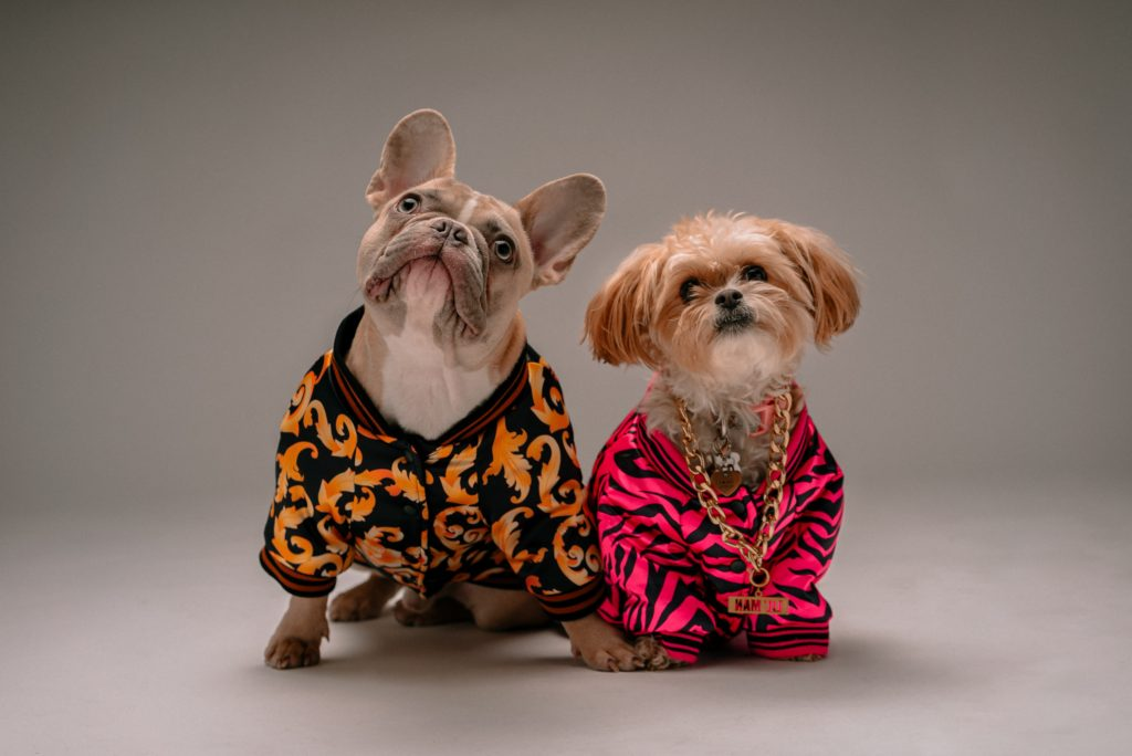 Luxury pet fashion